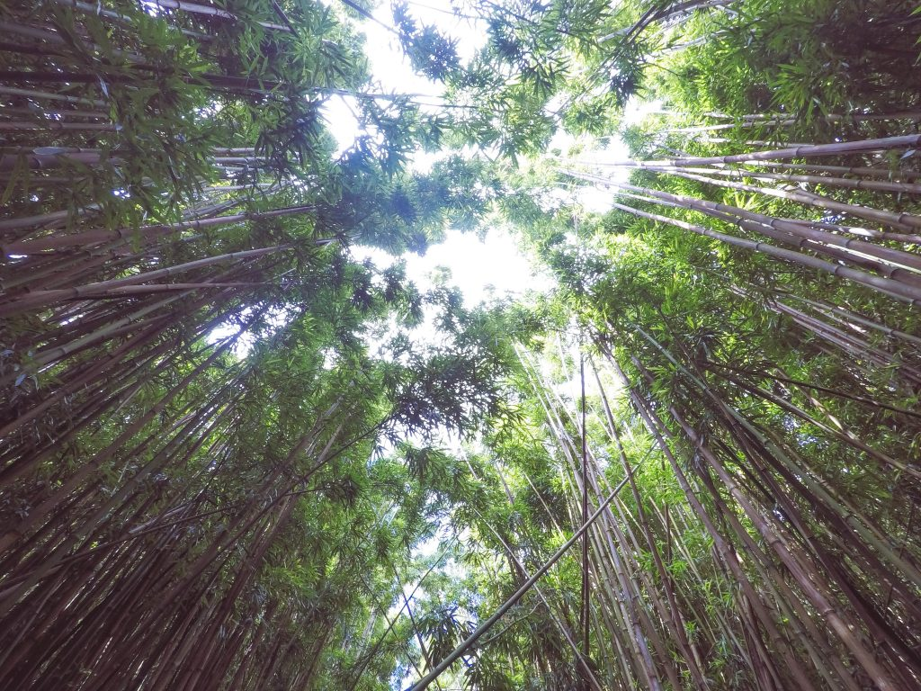 bamboo forest, pipiwai trail, maui, road to hana